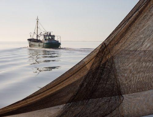 Sharon Dijksma haalt angel uit aanlandplicht voor bijvangst kottervisserij