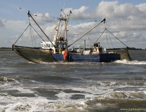 Ach gossie, Imares – het Buckler van mariene biologie – staat op omvallen