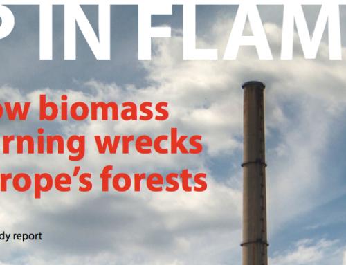 Klimaattop verkoopt broodje aap met bosplan als rookgordijn biomassastook
