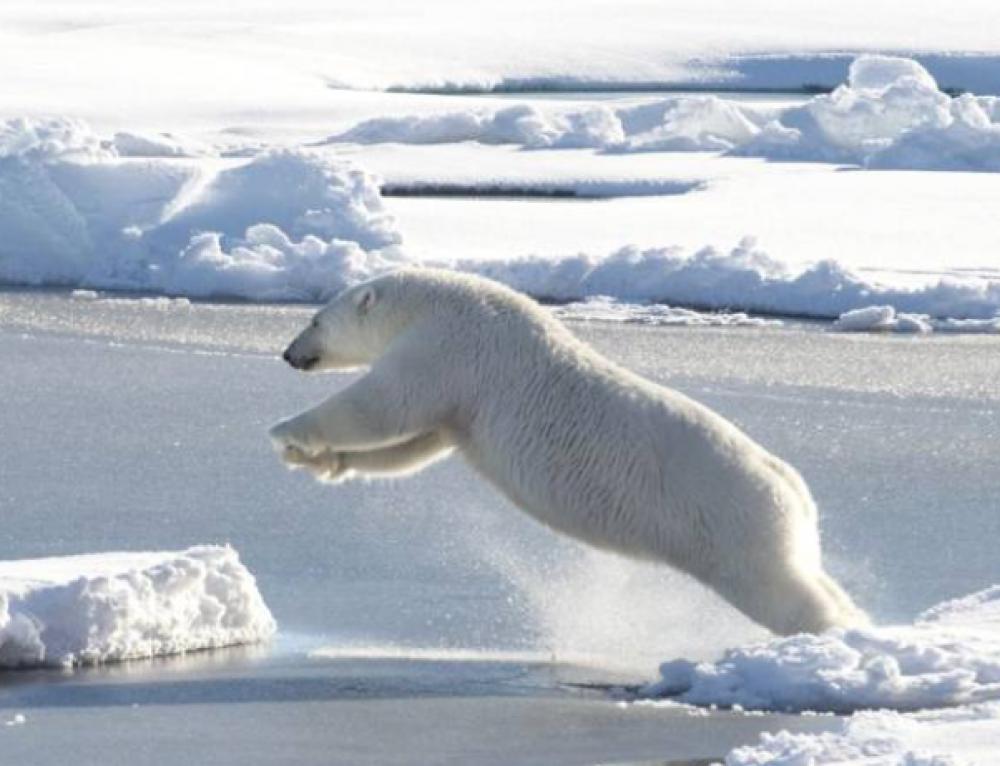 NOS-jeugdjournaal over ijsberen en permafrost