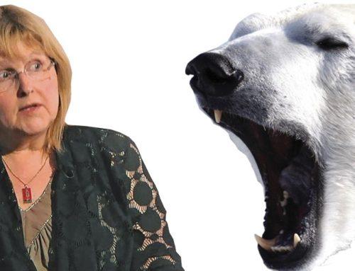 De ijsbeer: Een klimaaticoon valt van zijn troon