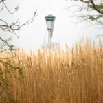 Olifantsgras op Schiphol