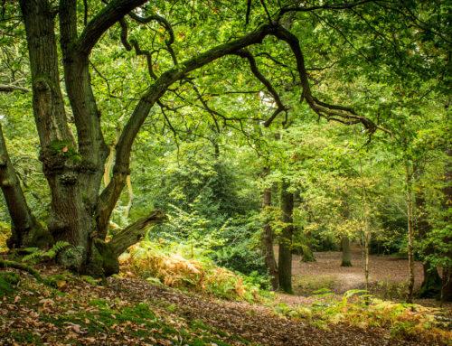 Géén vermindering CO2-uitstoot door verstoken biomassa