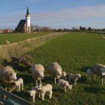 Noodkreet uit Texel