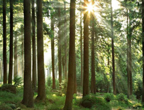 De onmisbare rol van CO2 bij het leven op aarde