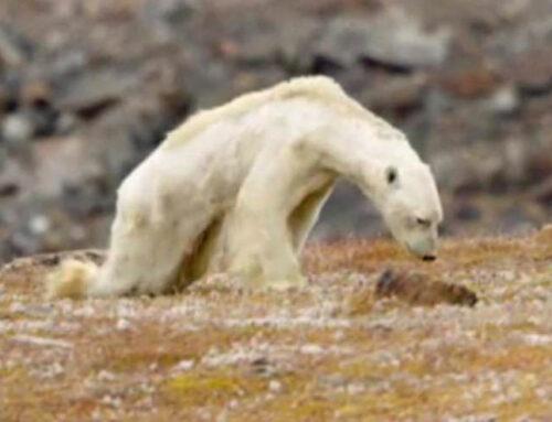 IJsberen, klimaathoax en hockeysticks