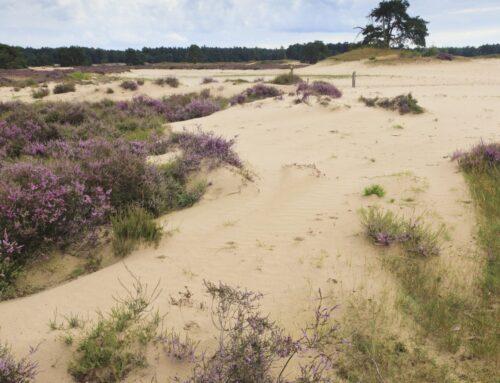 Heide, woeste gronden en stikstof