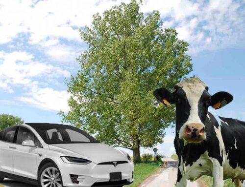De relatie tussen de koe, de boom en de Tesla