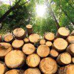 NOS presenteert 'WC-Eend' rapport van Royal HaskoningDHV: 'Klimaatimpact importgas groter dan van biomassa'