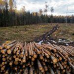 Milieuramp: ontbossing in Noord-Europa met 49% gestegen om de 'CO2-doelstellingen' te halen
