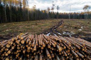 Milieuramp: ontbossing in Noord-Europa met 49% gestegen om de 'CO2-doelstellingen' te halen Voor 'CO2-neutrale' houtpellets