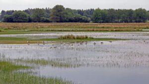 Afbraak bodemvoorraad natuurgebieden grootste stikstofbron meldt Staf (Stichting Agrifacts) na het analyseren van bodemmonsters