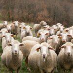 Vermijd kuddegeest