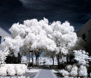 Infrarood en albedo Hoe zit het met de warmtestraling van bossen een miljard hectare extra bomen zou 200 gigaton CO2 uit de lucht halen.